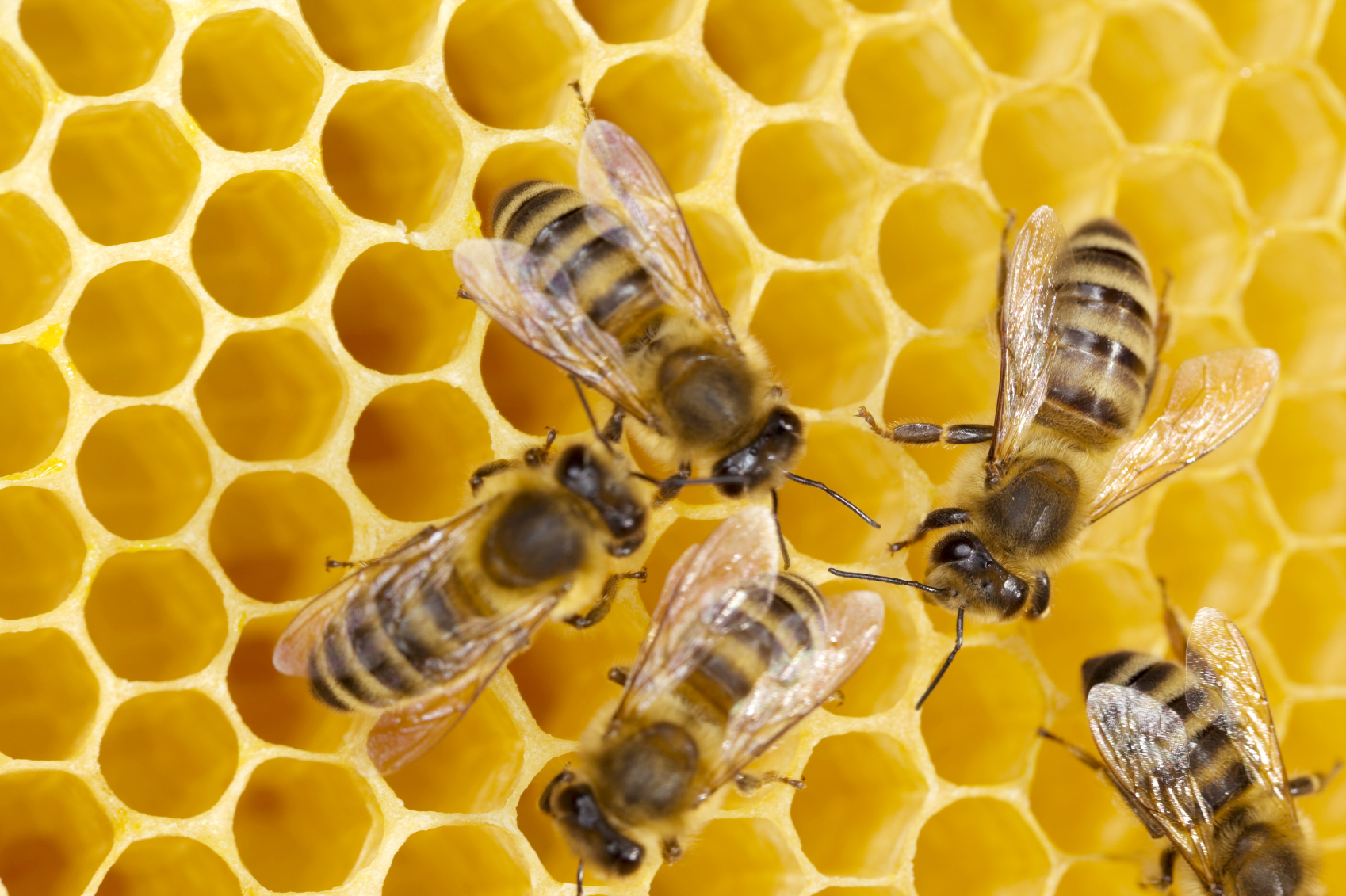 From The Bees: Two Simple Superfoods You've GOT To Try! - photo#49